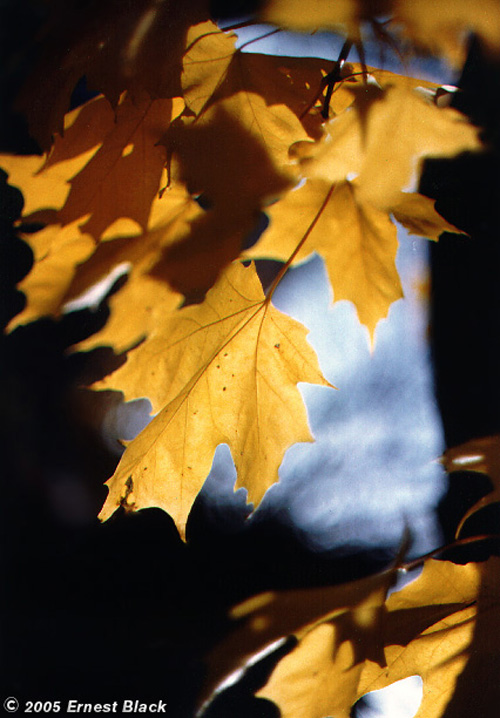http://www.standingstonedesigns.com/images/autumn_leaves.jpg